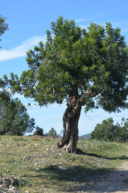Mallorca…..